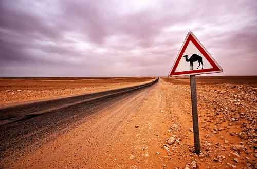 ¡Cuidaddo con los camellos!