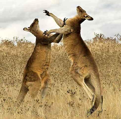 5 Espectaculares imágenes de Australia 4