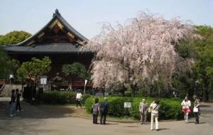 Parque Ueno en Tokio (Fuente: Burkepaterson.com)