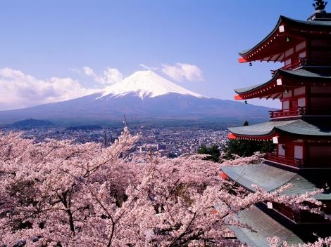 Japón, cerezos en Flor ( Fuente: travelnauta.com)
