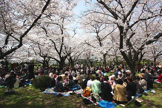 Pic-nic durante el Hanami. (Fuente: Japan-guide.com)