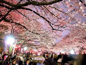 Yozakura en Parque Ueno, Tokio (Fuente: Japan-i.jp)