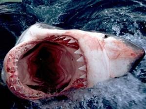 Tiburón blanco ( Fuente: Taringa.net)