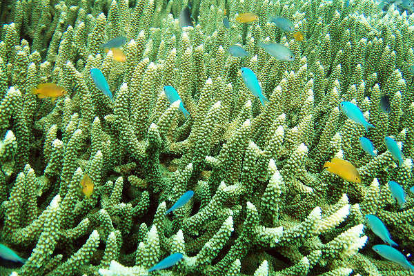 Raja Ampat, coral y peces