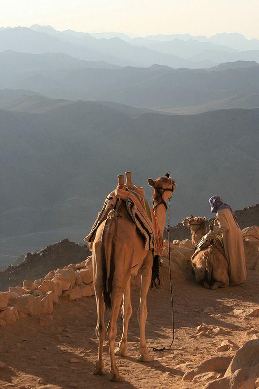 سيناء أرض الفيروز 1