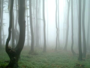 Bosques en los que a Caperucita le hubiera gustado perderse