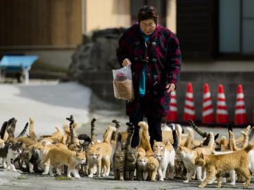 أوشيما.. جزيرة يابانية تحتلها القطط