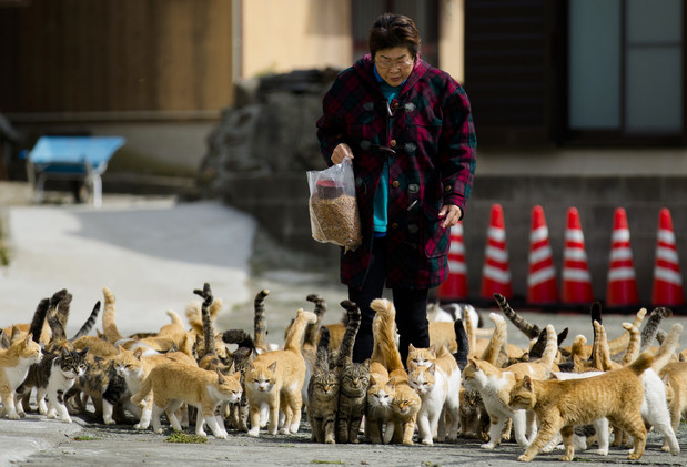أوشيما.. جزيرة يابانية تحتلها القطط 1