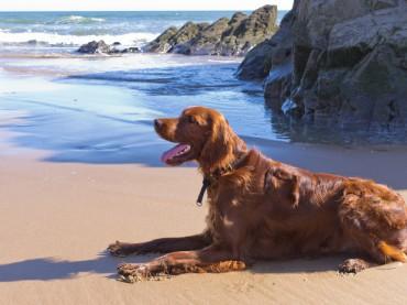 Vacaciones Pet Friendly