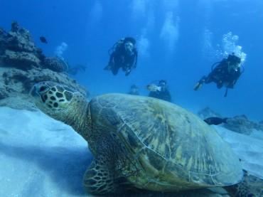 ¡Un verano bajo el mar!