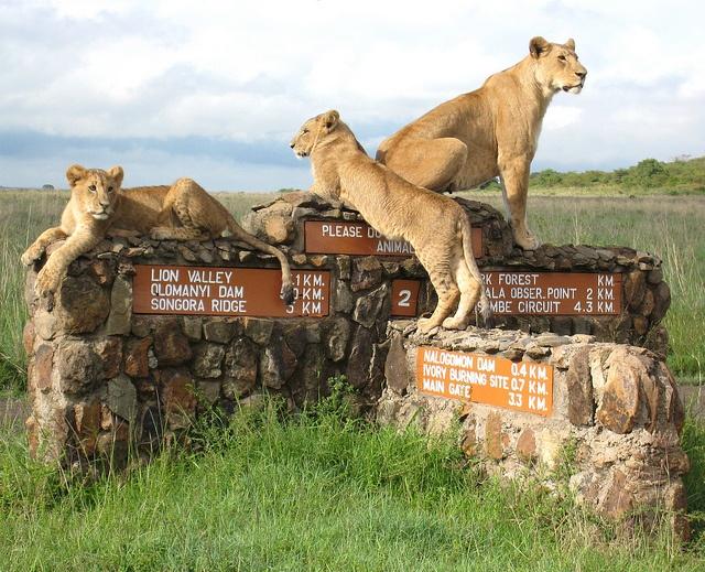 دليل سفرك إلي  نيروبي كينيا 1