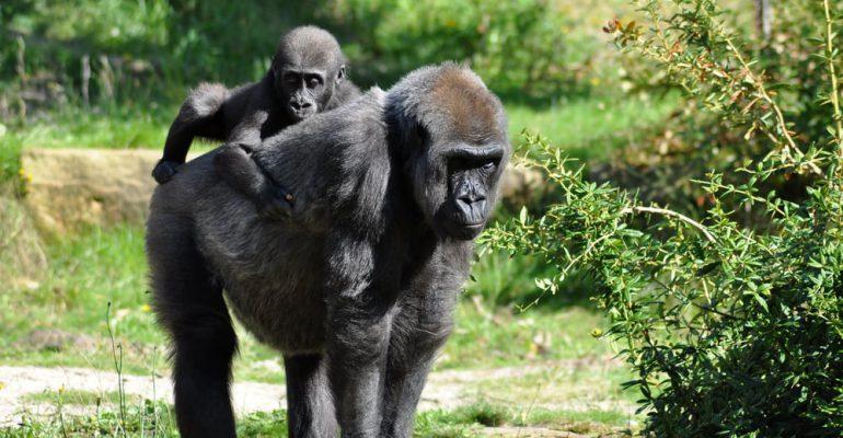 Uganda, el reencuentro con los orígenes (by Amuda Goueli)