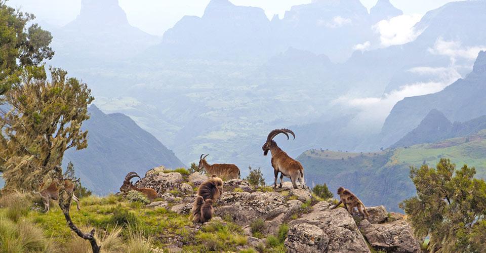 اثيوبيا مغامرة افريقيا التي لا يعرفها الكثيرون 1