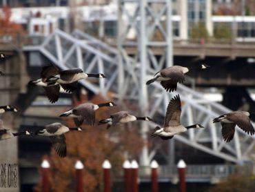 Portland, la ciudad más 'hipster' de EE.UU