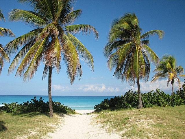 Imagen-de-palmeras-en-la-playa-de-varadero