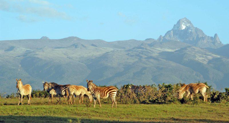 كينيا-افريقيا