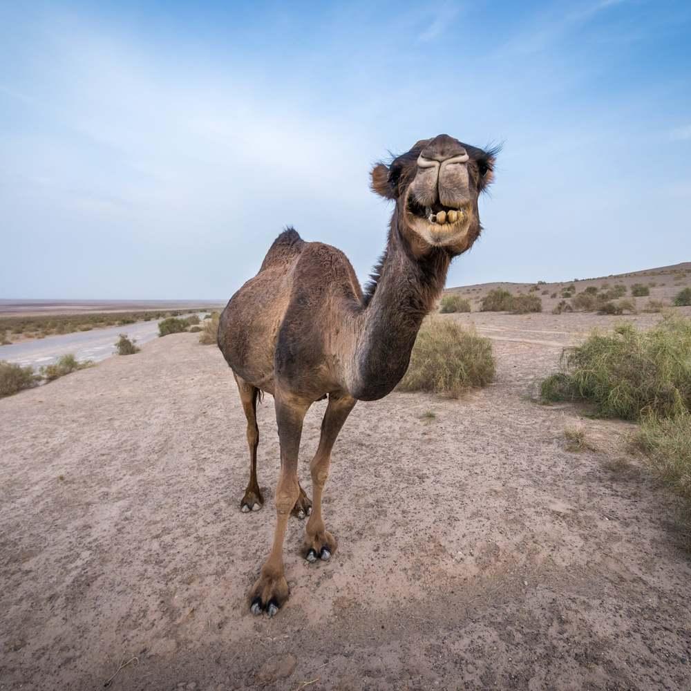کویر-گردی-مرنجاب-ایران-کاشان