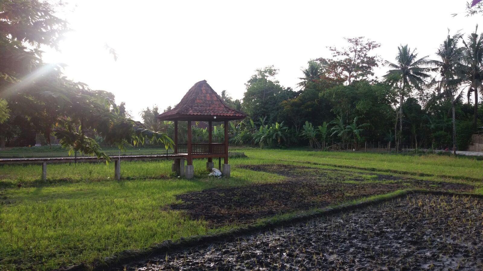 Yogyakarta-campo-de-arroz
