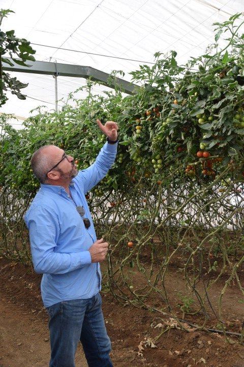 Murcia-Mazarrón-tomates