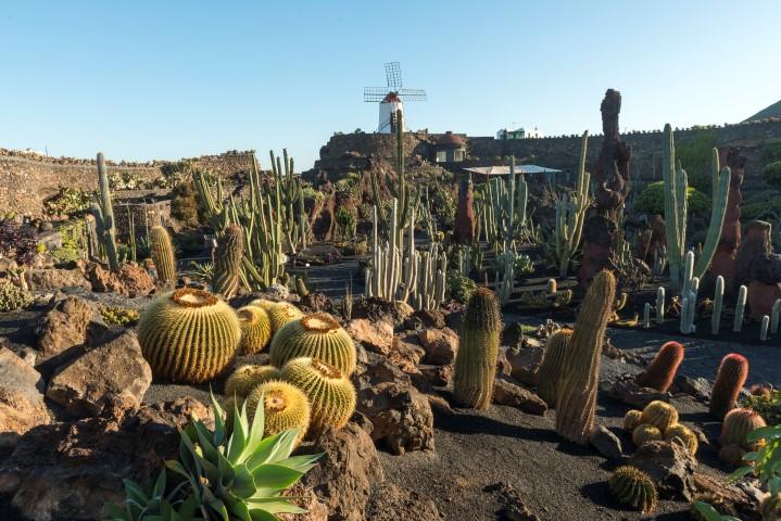 Canarias-Lanzarote-jardin-cactus