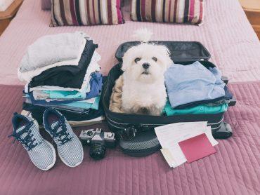 چگونه با حیوان خانگی خود سفر برویم