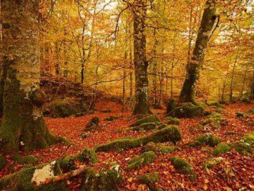 15 paisajes de otoño