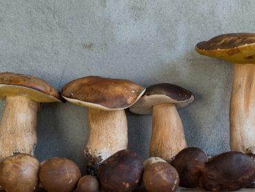Destinos para cazadores de setas y una guía donde comerlas mejor