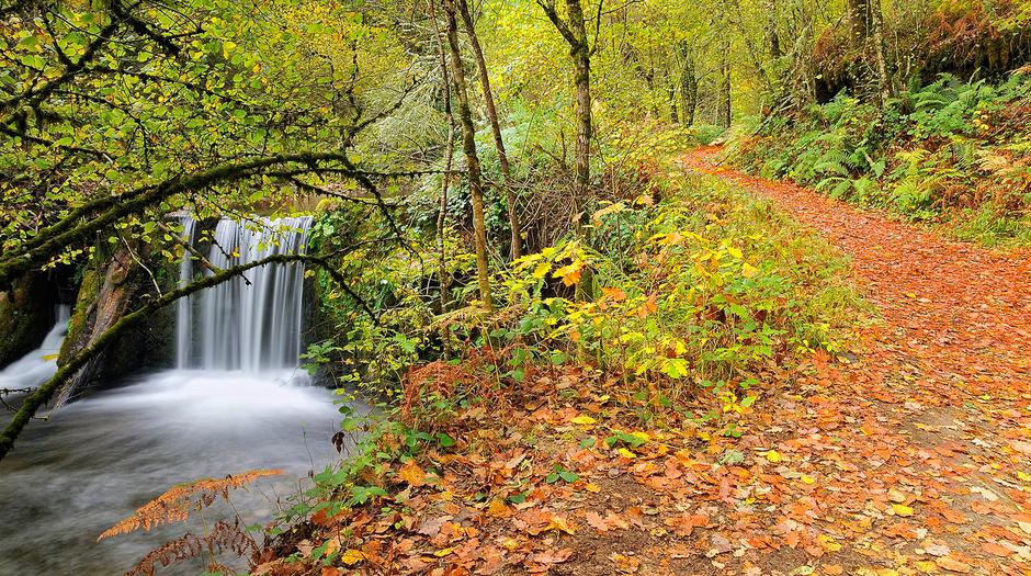 Cascadas en España - Bosque de Muniellos en Asturias