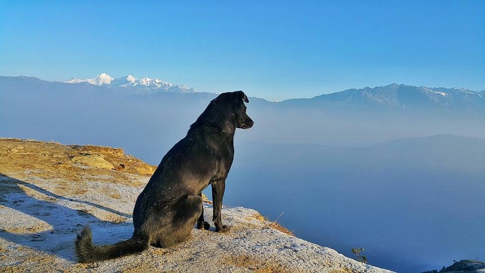 Celebra el Día Mundial del Perro con tu mejor amigo 1