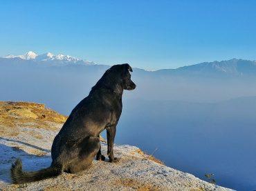 Celebra el Día Mundial del Perro con tu mejor amigo