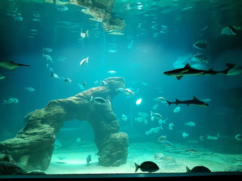 acuario cantabria