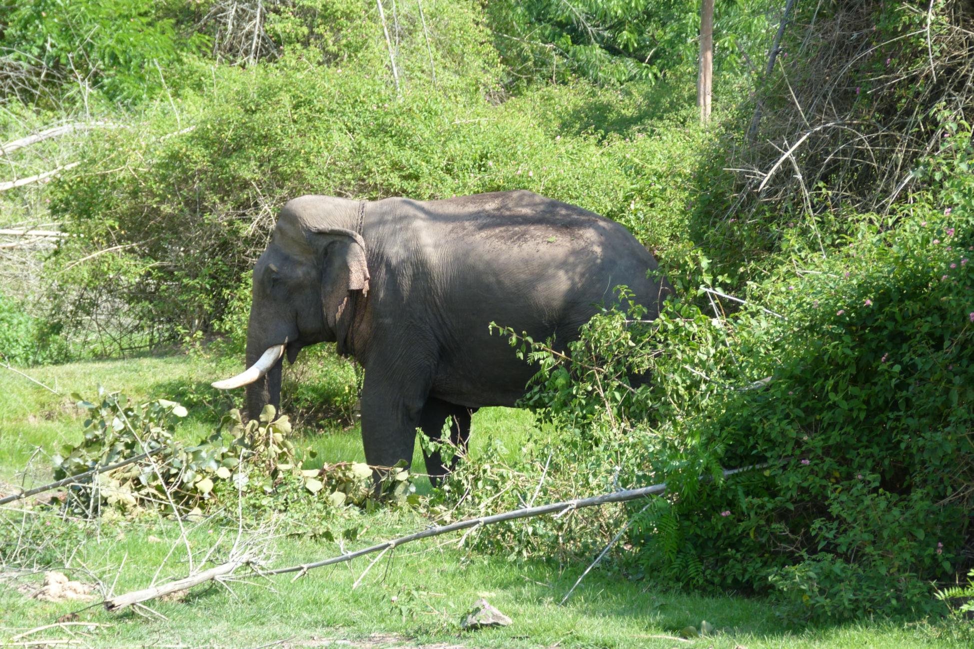 bandipur safari india