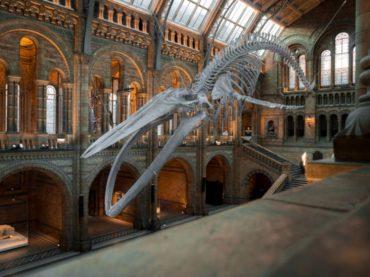 Museos gratis: ¿cómo visitar los mejores del mundo por la cara?