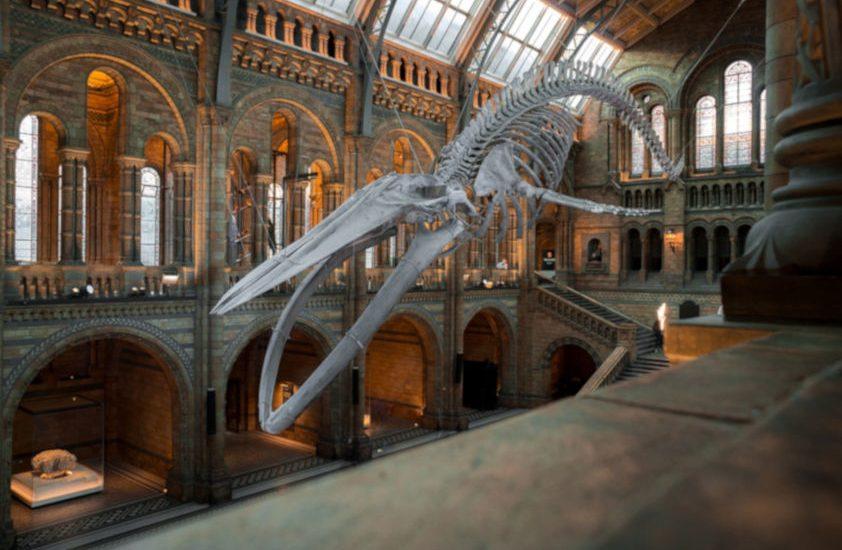 Museos gratis: ¿cómo visitar los mejores del mundo por la cara? 1