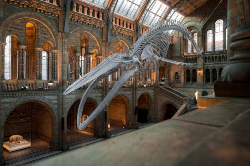 museo gratis londres