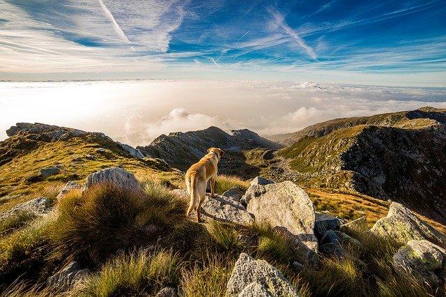 viajar con perro te hace feliz