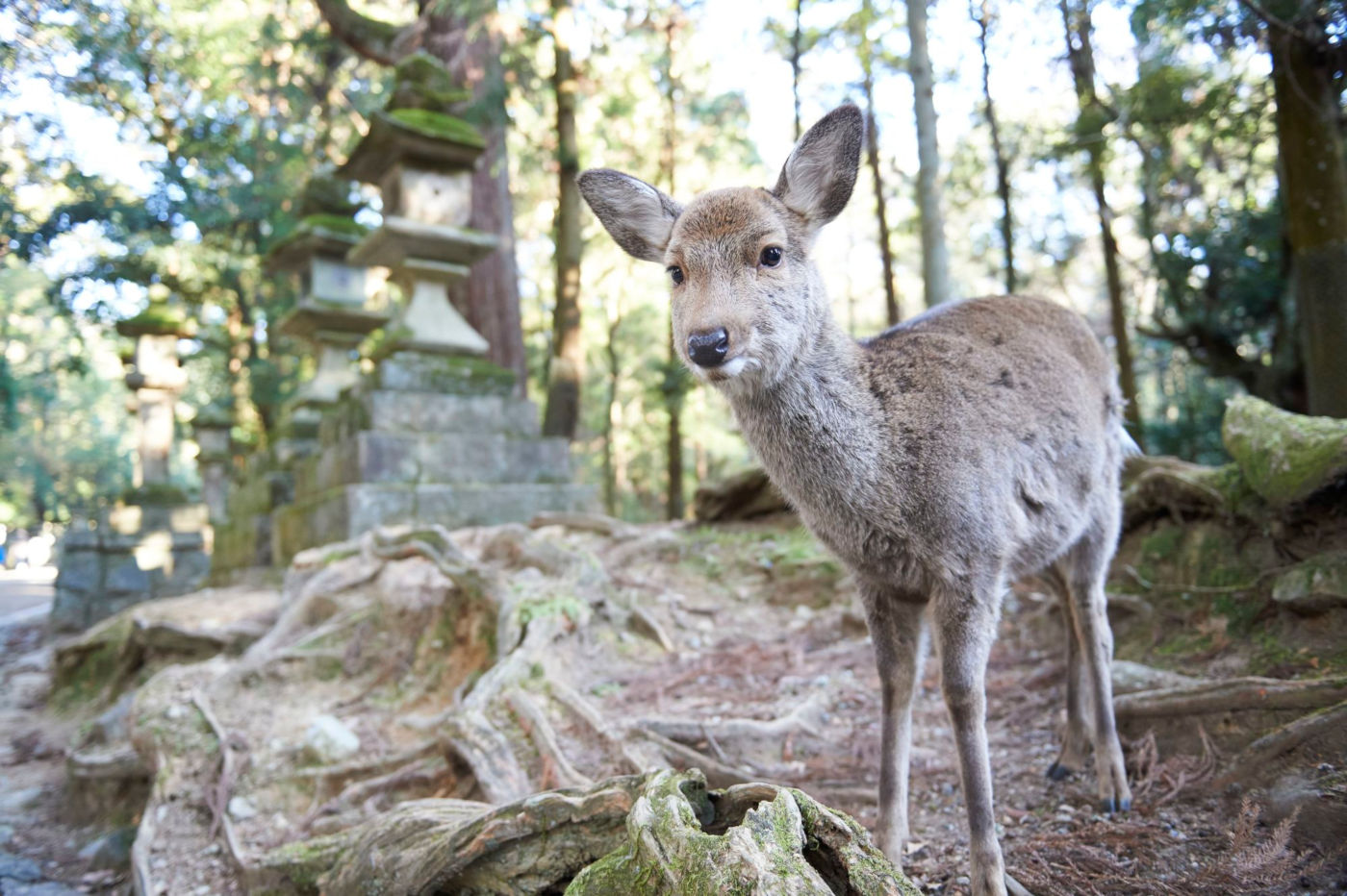visita japon