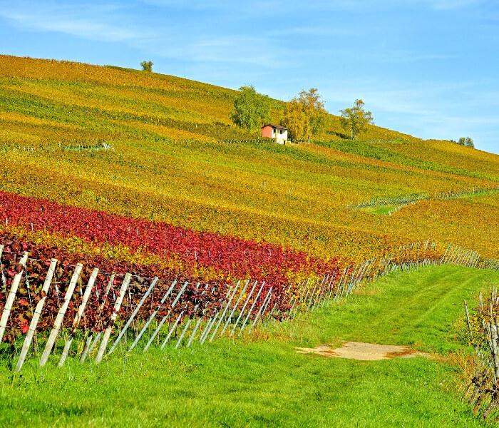 Escapada: La Rioja Alavesa