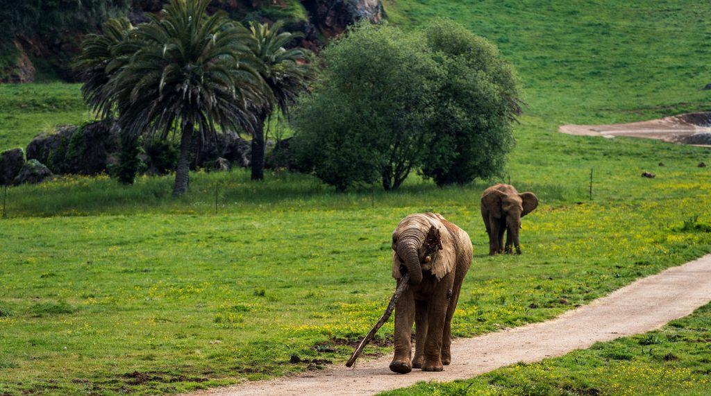 Parque Natural de Cabárceno. Elefantes