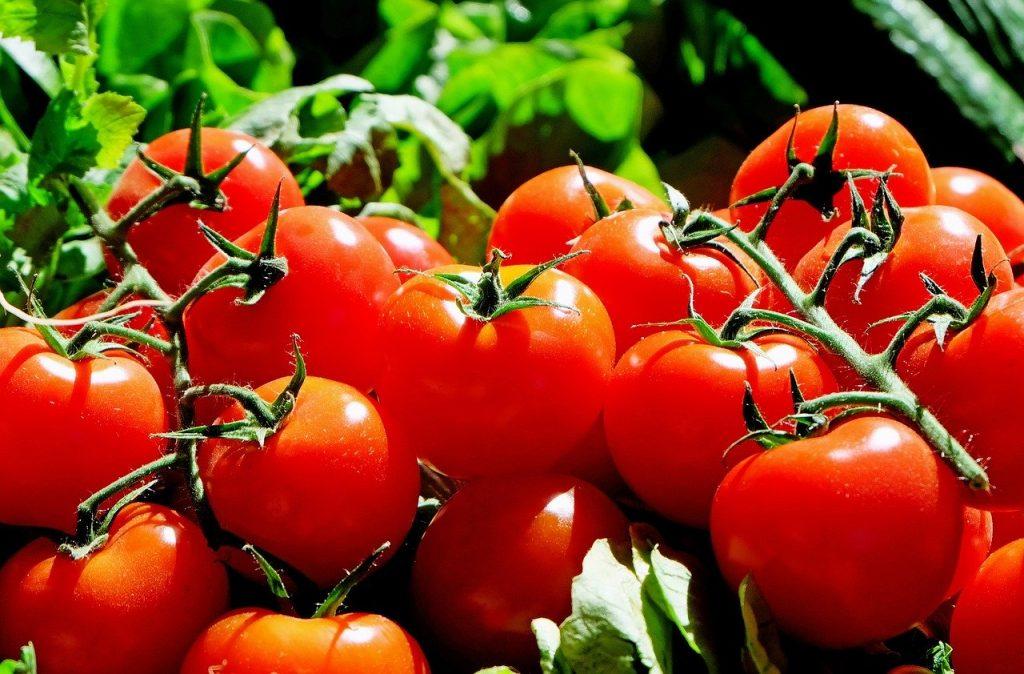 almeria-tomates