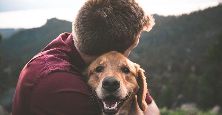 10 planes alternativos para hacer con tu perro