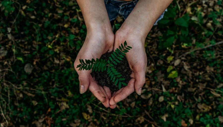 Manos sosteniendo una planta pequeña de ramas verdes