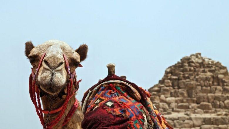 Qué ver y hacer en Egipto
