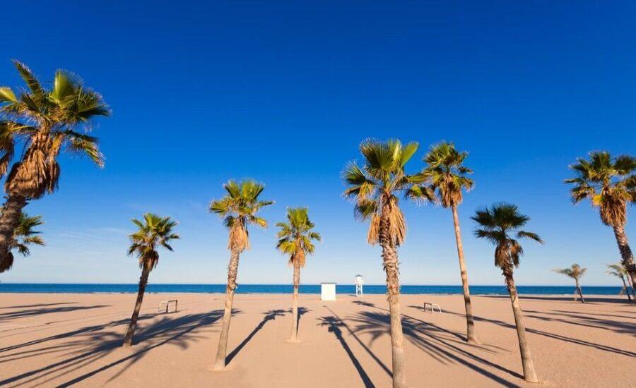 Palmeras, arena blanca y mar al fondo de la playa de Gandia